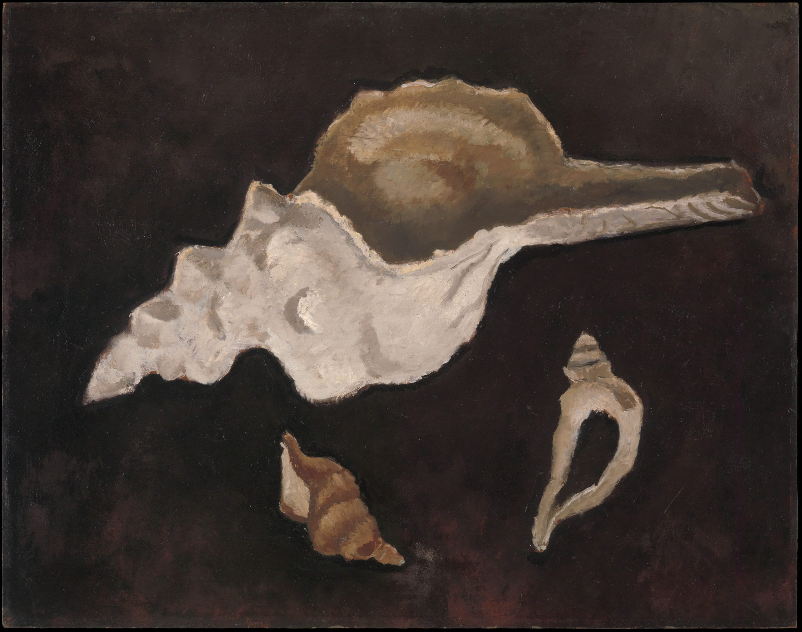 Two small, off-white conch shells below a larger shell on an empty black background.