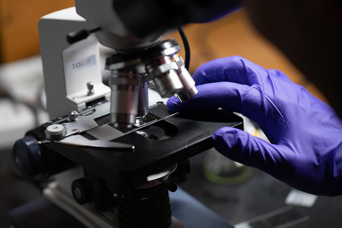 A scientist's hand, in a purple glove, adjusts a plate on a microscope.